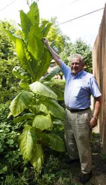 Al Brierly's Tobacco Plant